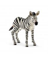 Zebra - veulen