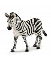 Zebra merrie